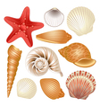 Seashells collection vector | Price: 3 Credits (USD $3)