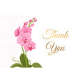 thank you card pink orchid phalaenopsis flower vector image vector image