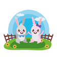 cute rabbit couple vector image vector image