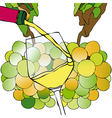 Grapes and White Wine vector image vector image