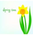Spring card background with daffodil vector image