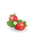 strawberries with leaves on white background vector image