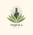 tequila bar logo design vector image