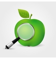 Apple under magnifying glass vector image vector image