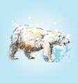 Colored sketch of a polar bear vector image