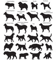 dog show silhouettes vector image