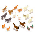 farm animals isometric horse and dog cat and vector image