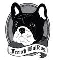 French Bulldog Portrait Isolated dog vector image vector image