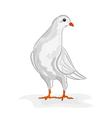 White dove White pigeon symbol peace vector image vector image