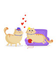 cute cartoon couple of cats in love male and vector image