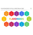 flavonoids in full spectrum cbd with structural vector image vector image