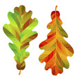 two autumn oak leaves isolated on white vector image vector image
