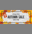 autumn sale fallen maple leaves frame brick vector image vector image