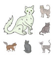 breeds of cats cartoon icons in set collection for vector image