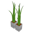 grass in a pot on white background vector image vector image