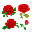 red roses with buds and leaves set two vector image