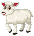 white lamb on white background vector image vector image