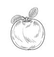 apple sketch vector image vector image