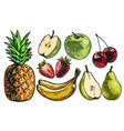 fruits set color vector image vector image