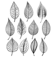 set abstract isolated leaves vector image vector image
