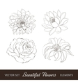 Set of flowers isolated over white vector image vector image