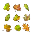 Autumn or fall leaves set isolated on white vector image vector image