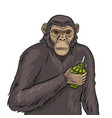 monkey with grenade pop art vector image vector image