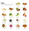 Nuts collection isolated on white vector image vector image