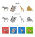 african zebra animal koala giraffe wild vector image vector image