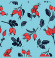 beautiful floral viburnum red berries and navy vector image vector image