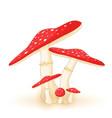 different mushrooms amanita of vector image