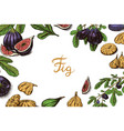 fresh figs poster or banner detox spice dried vector image