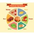 Hamburger ingredients infographic vector image vector image