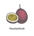 Hand-drawn ripe juicy passionfruit cut piece half vector image