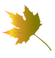 maple leaves yellow vector image vector image