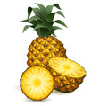 pineapple vector image