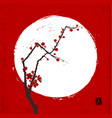 branch japanese sakura cherry in blossom and vector image
