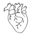doodle human heart drawn vector image vector image