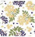 elderberry and elderflower seamless pattern hand vector image vector image