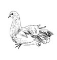 hand drawn dove vector image vector image