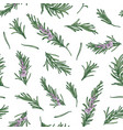 herbal seamless pattern with rosemary sprigs on vector image vector image