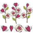 colored blooming magnolia branches vector image vector image