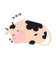 cute sleeping baby cow adorable funny farm animal