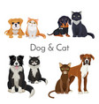 dog and cat promotional poster with grown animal vector image vector image