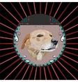 Dog in a circle