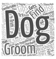 grooming and brushing tips for dogs that are vector image vector image