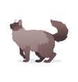 long-haired cat with long fluffy tail icon pet vector image vector image