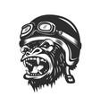 angry gorilla ape in racer helmet design element vector image