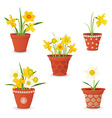 collection of daffodil planted in ceramic pots for vector image