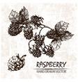 digital detailed raspberry hand drawn vector image